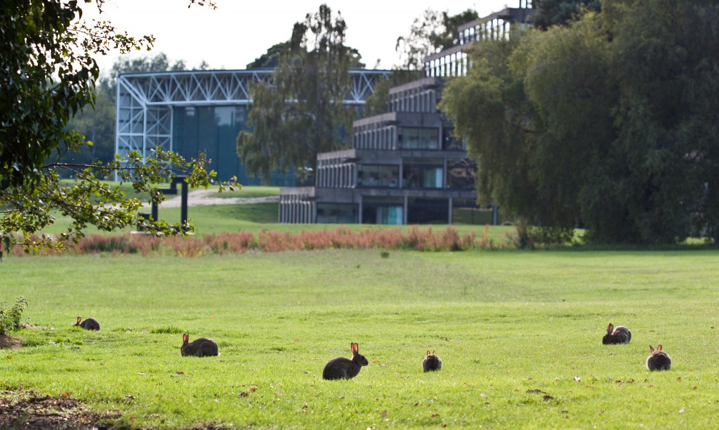 The UEA campus certainly had lots of bunnies! Image made available under CC BY-NC-SA 2.0 by PGBrown1987